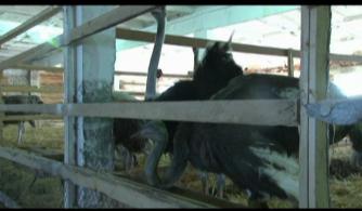 Страусиная  ферма - 2014 г.